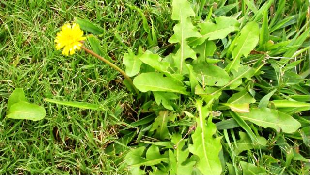 Самые эффективные средства от сорняков: рейтинг лучших гербицидов 2021 года