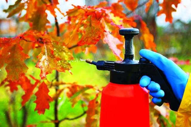Обработка сада осенью: чем обрабатывать, лучшие и эффективные средства
