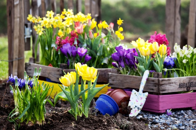 Какие цветы сеять под зиму: когда сеять, список цветов