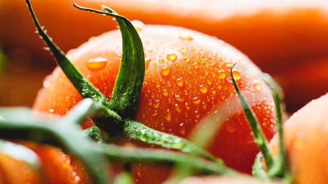 Посадка помидор на рассаду и в теплицу в 2020 году: календарь